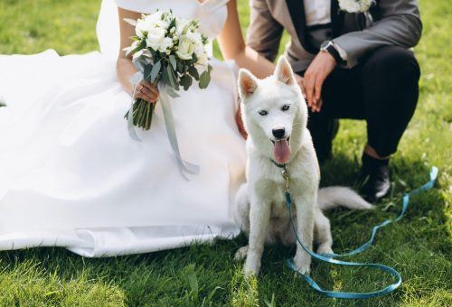 bride-with-groom-with-their-dog-on-their-wedding-day-min