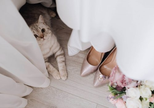 grey-cat-near-curtains-wedding-rings-bouquet-and-shoes-on-the-floor-min
